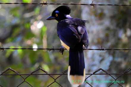 brot für vögel